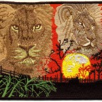 Lions and sunset